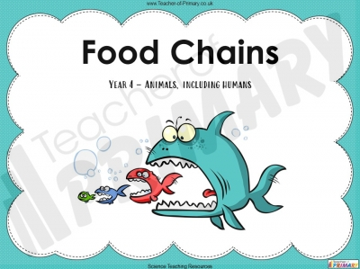 Food Chains - Year 4