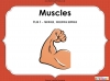 Muscles - Year 3 (slide 1/42)