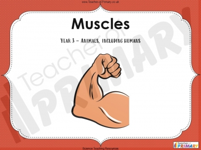 Muscles - Year 3 teaching resource
