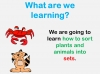 Sorting Plants and Animals (slide 2/12)