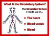 The Circulatory System (slide 2/35)