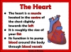 The Circulatory System (slide 4/35)