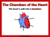 The Circulatory System (slide 7/35)