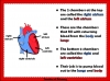 The Circulatory System (slide 8/35)