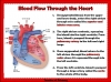 The Circulatory System (slide 9/35)