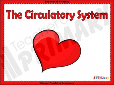 The Circulatory System teaching resource