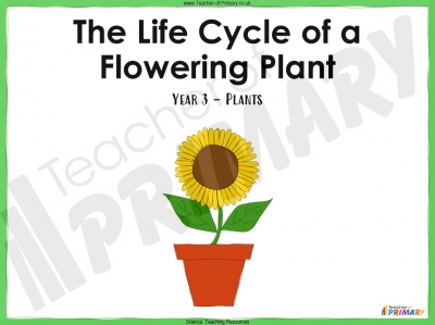 The Life Cycle of a Flowering Plant - Year 3