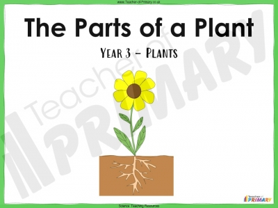 The Parts of a Plant - Year 3